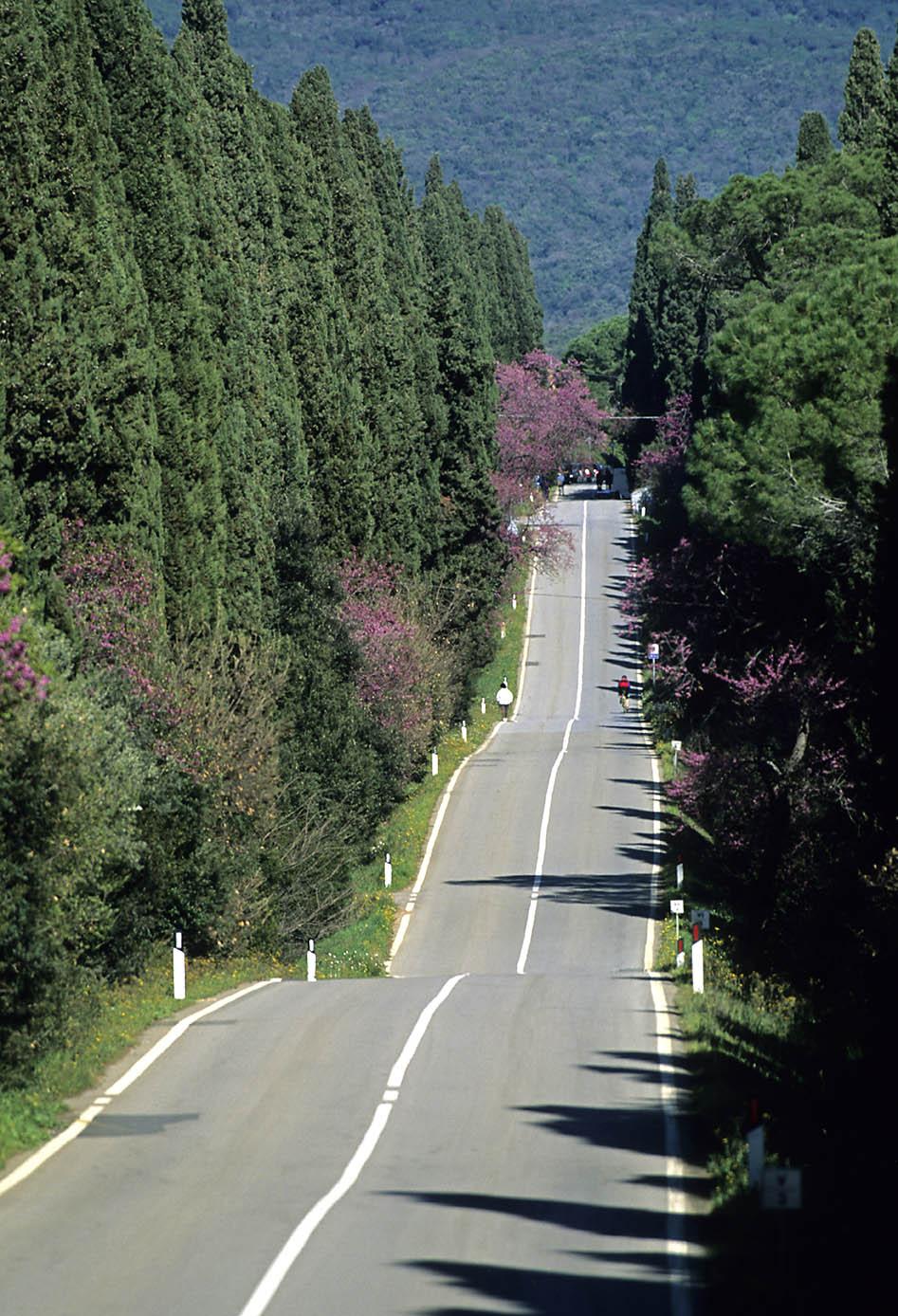 ITALIA, TOSCANA, COSTA DEGLI ETRUSCHI, Bolgheri (LI), il Viale dei Cipressi.