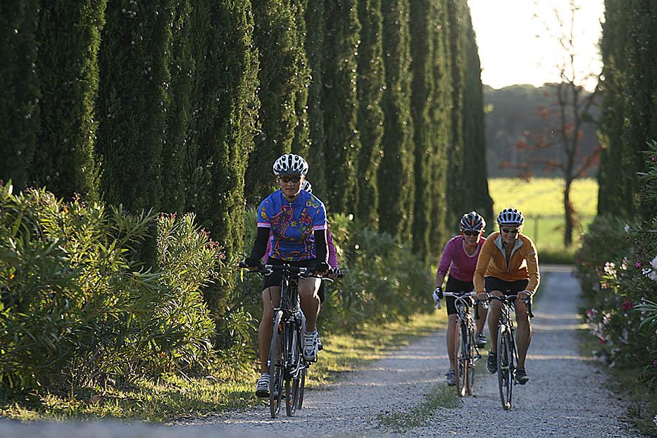 ITALIA, TOSCANA, COSTA DEGLI ETRUSCHI, Castagneto Carducci (LI); in bici nella zona di Bolgheri (azienda agricola Chiappini).